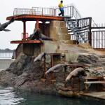 Steller Sea Lion Show