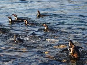 ペンギン海