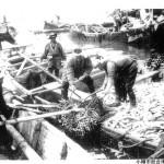 ニシン漁 (2)
